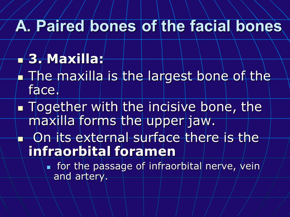 What is the largest facial bone called - Answerscom