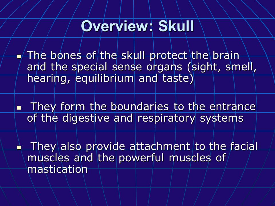 Overview: Skull The bones of the skull protect the brain and the special sense organs (sight, smell, hearing, equilibrium and taste)