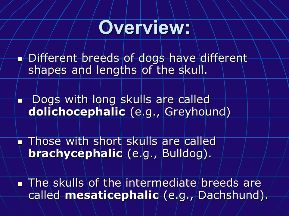 Overview: Different breeds of dogs have different shapes and lengths of the skull.