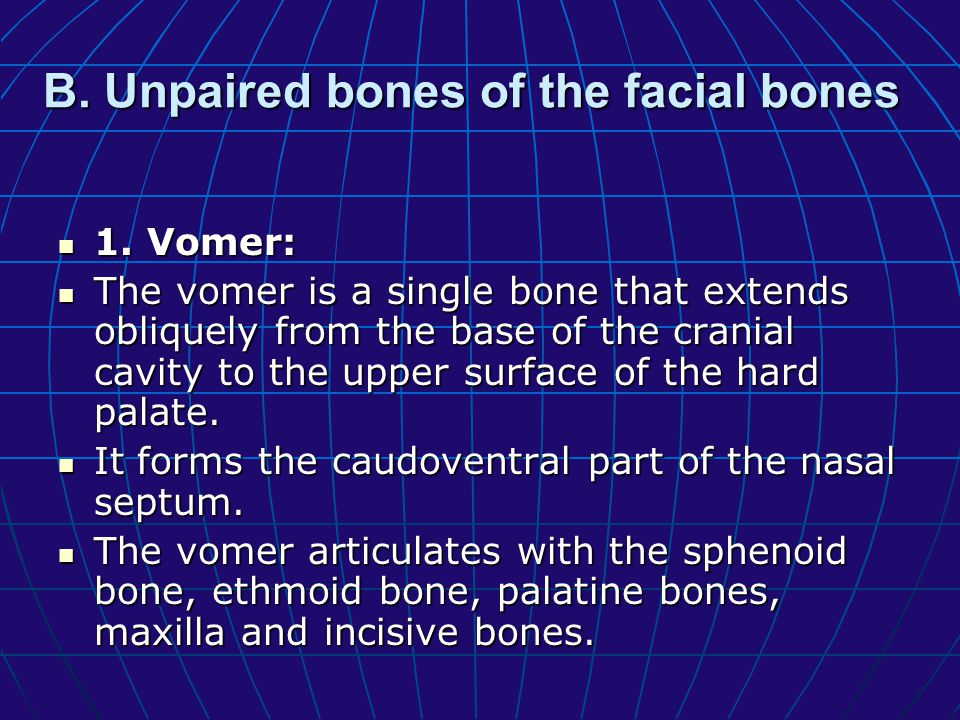 B. Unpaired bones of the facial bones