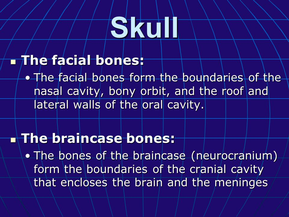 Skull The facial bones: The braincase bones:
