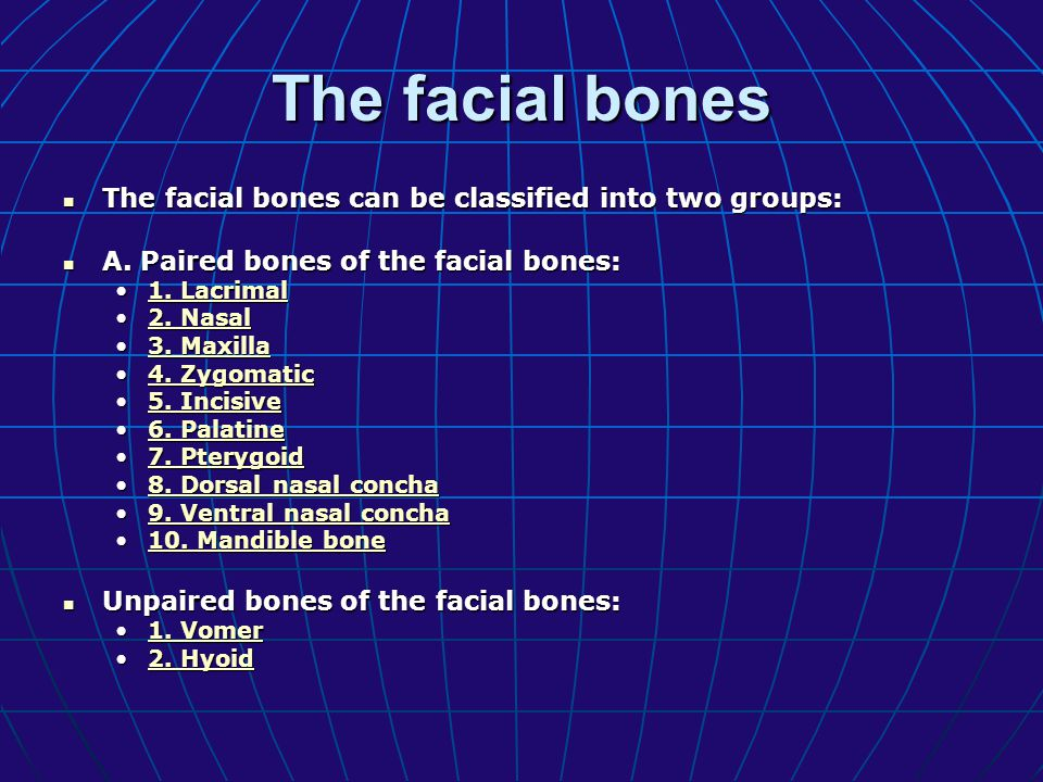 The facial bones The facial bones can be classified into two groups: