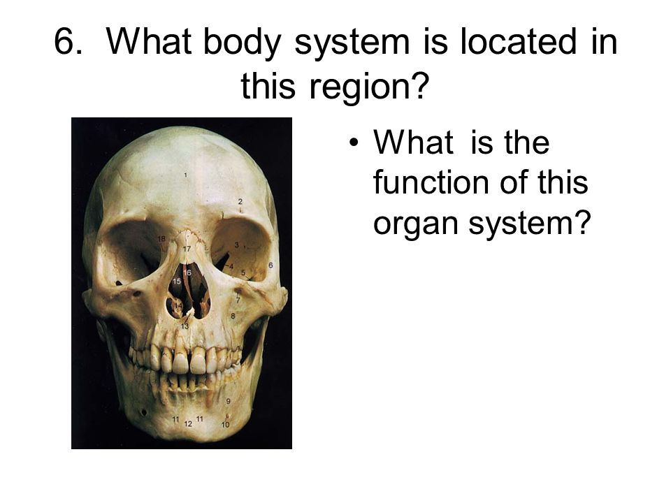 6. What body system is located in this region