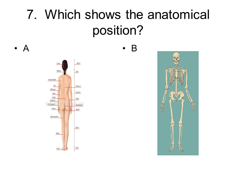 7. Which shows the anatomical position