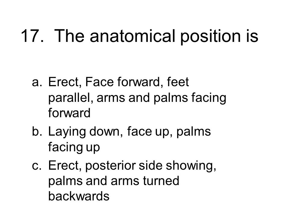 17. The anatomical position is