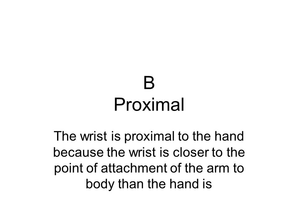 B Proximal The wrist is proximal to the hand because the wrist is closer to the point of attachment of the arm to body than the hand is.