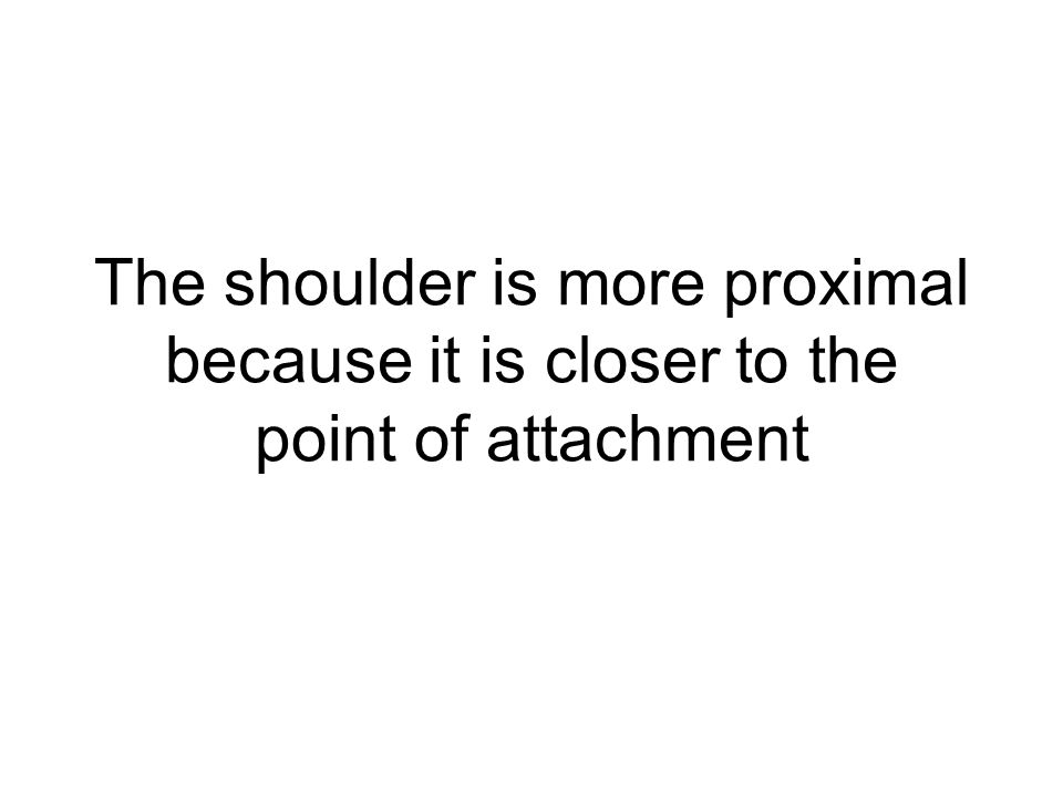The shoulder is more proximal because it is closer to the point of attachment