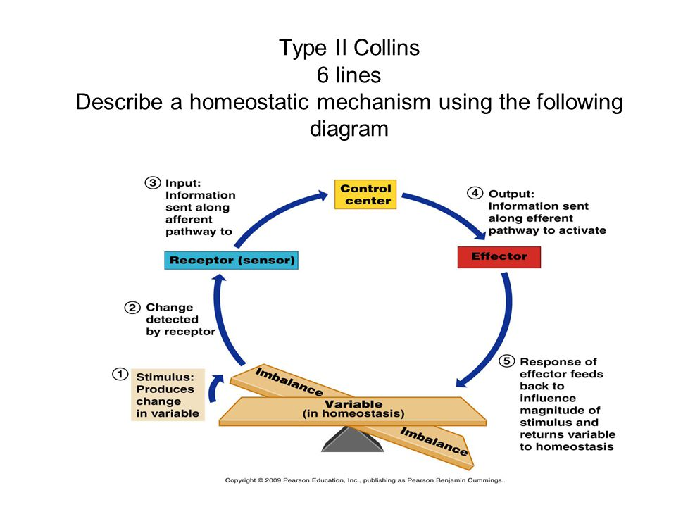 Type II Collins 6 lines Describe a homeostatic mechanism using the following diagram