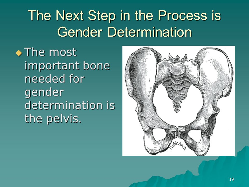 The Next Step in the Process is Gender Determination