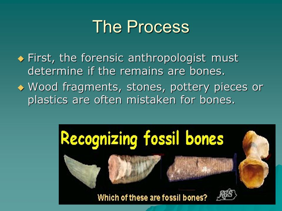 The Process First, the forensic anthropologist must determine if the remains are bones.