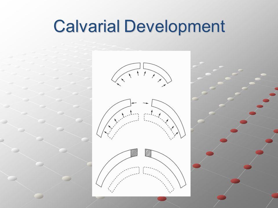 Calvarial Development