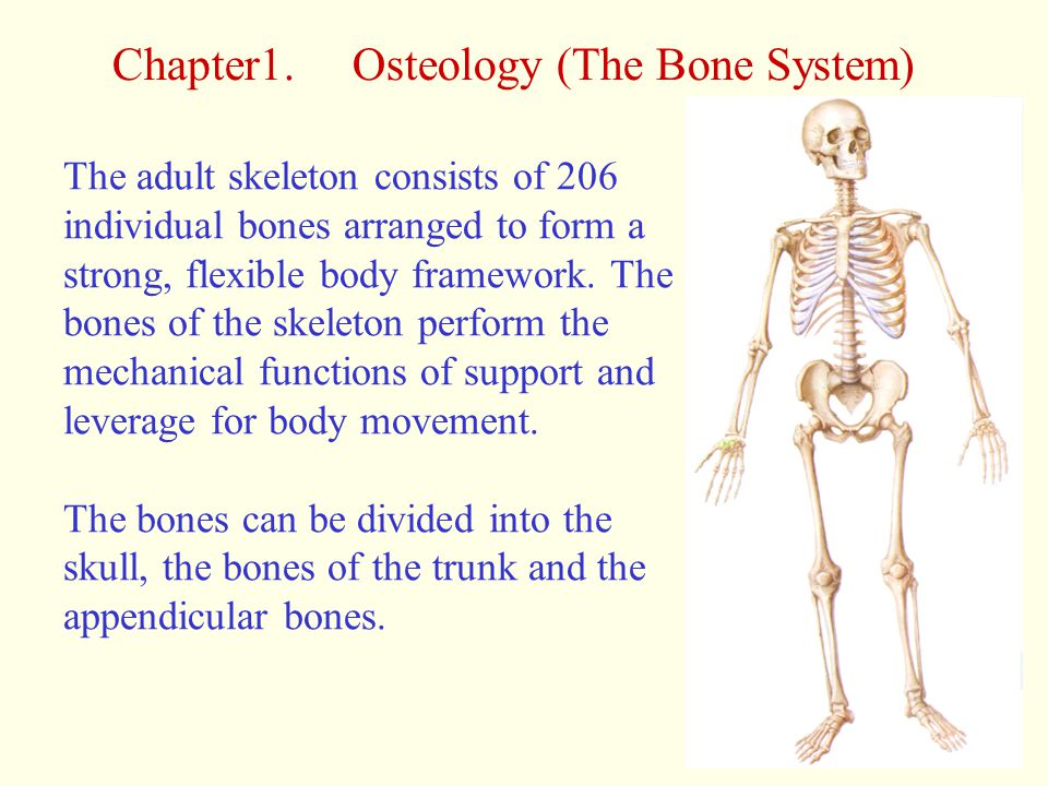 Chapter1. Osteology (The Bone System)