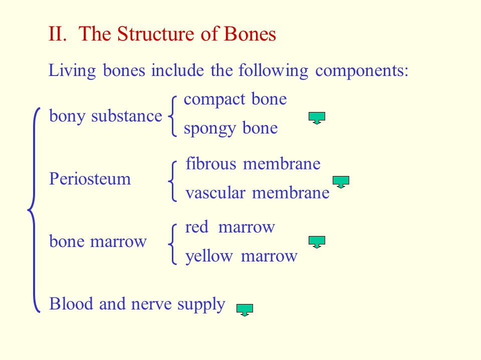 II. The Structure of Bones