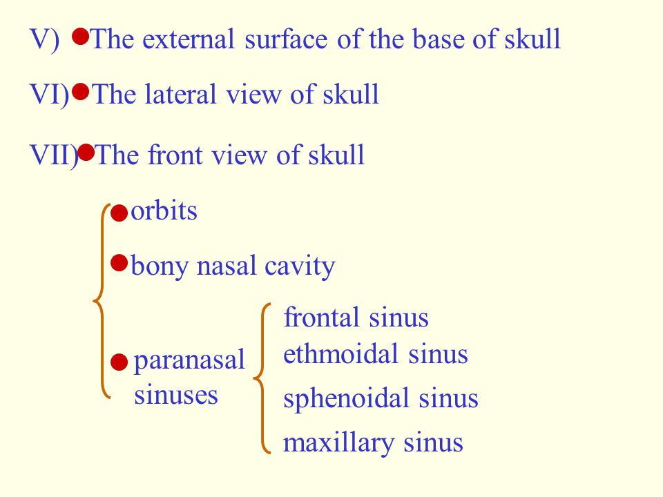 V) The external surface of the base of skull