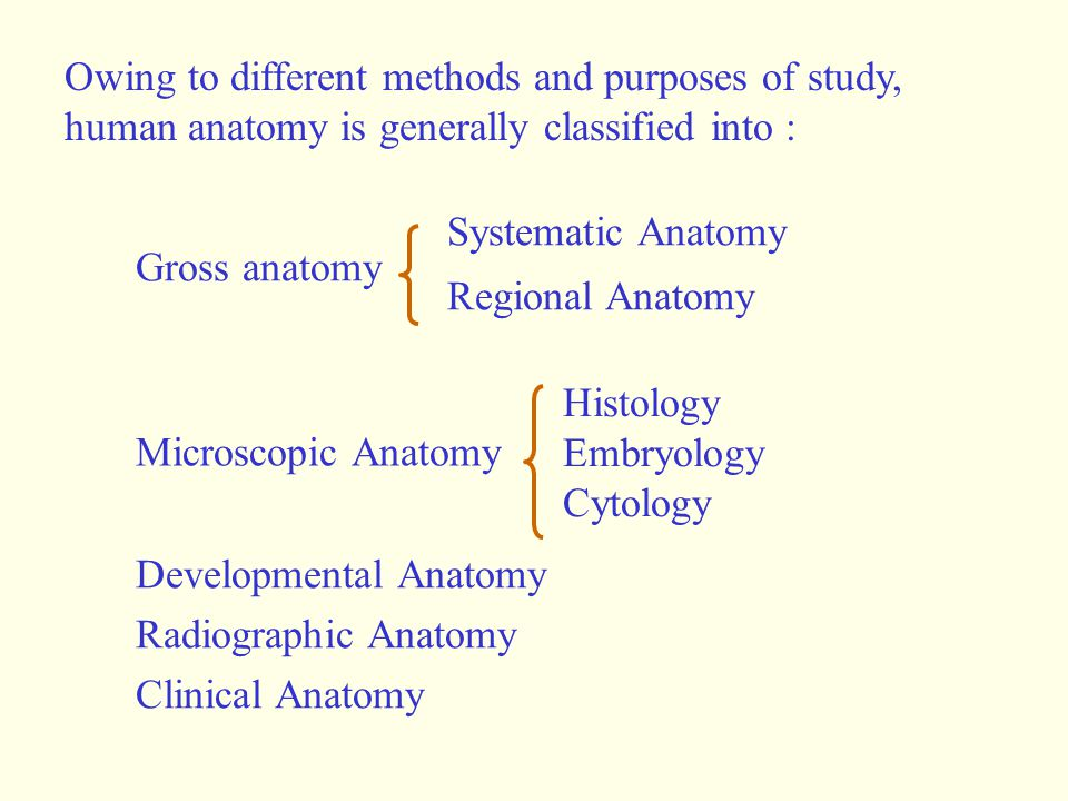 Owing to different methods and purposes of study, human anatomy is generally classified into :
