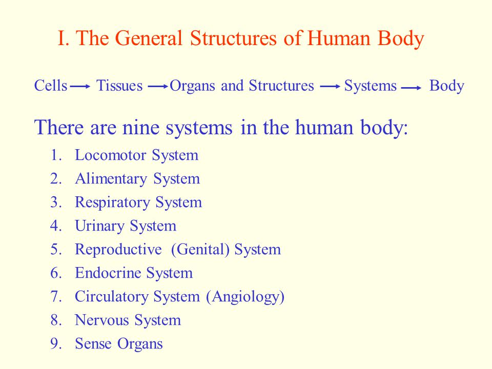 I. The General Structures of Human Body