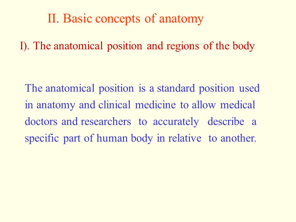 II. Basic concepts of anatomy
