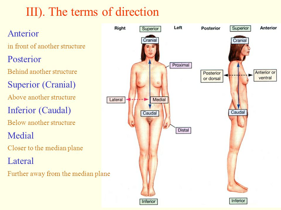 III). The terms of direction