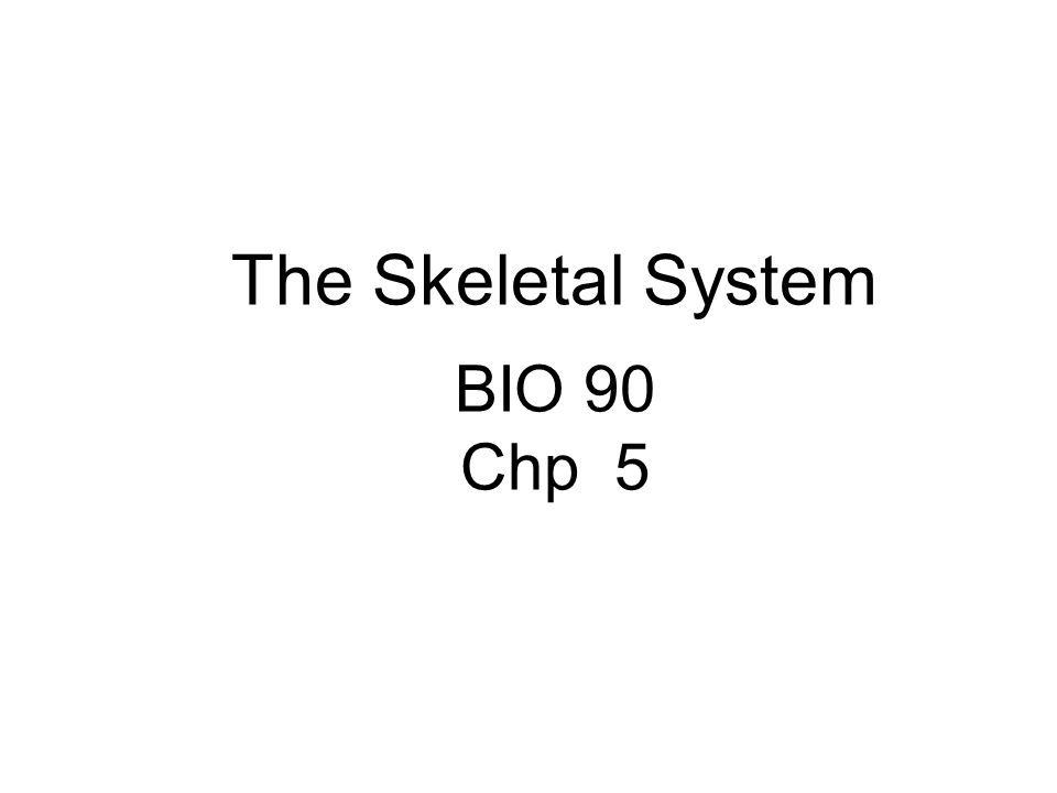 The Skeletal System BIO 90 Chp 5