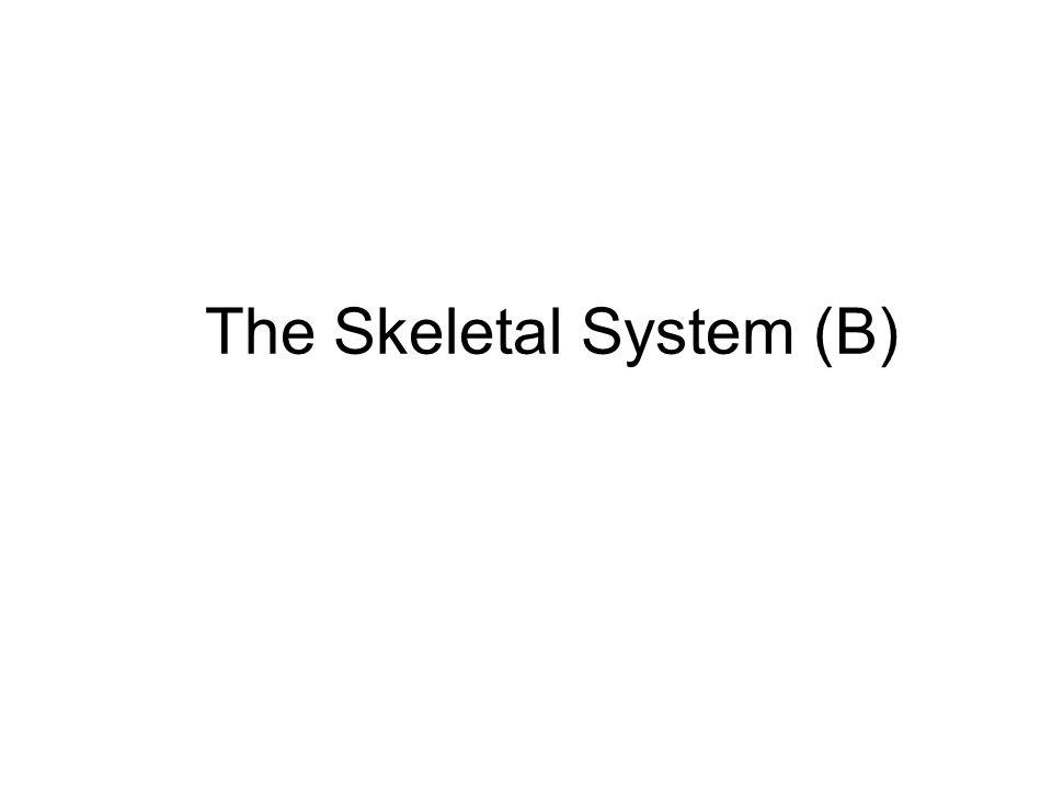 The Skeletal System (B)