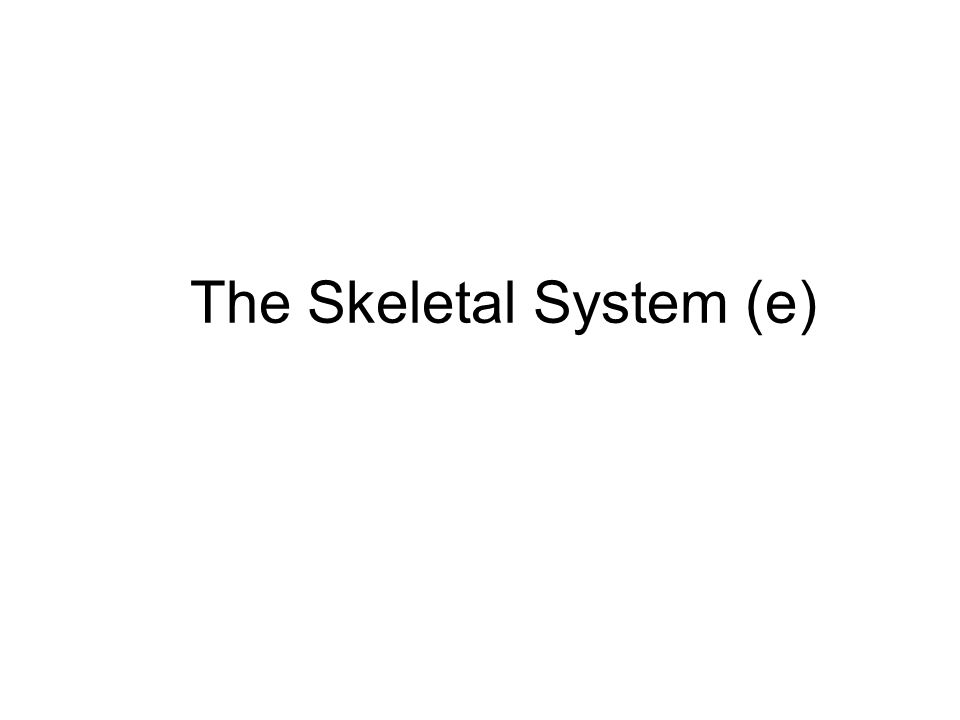 The Skeletal System (e)