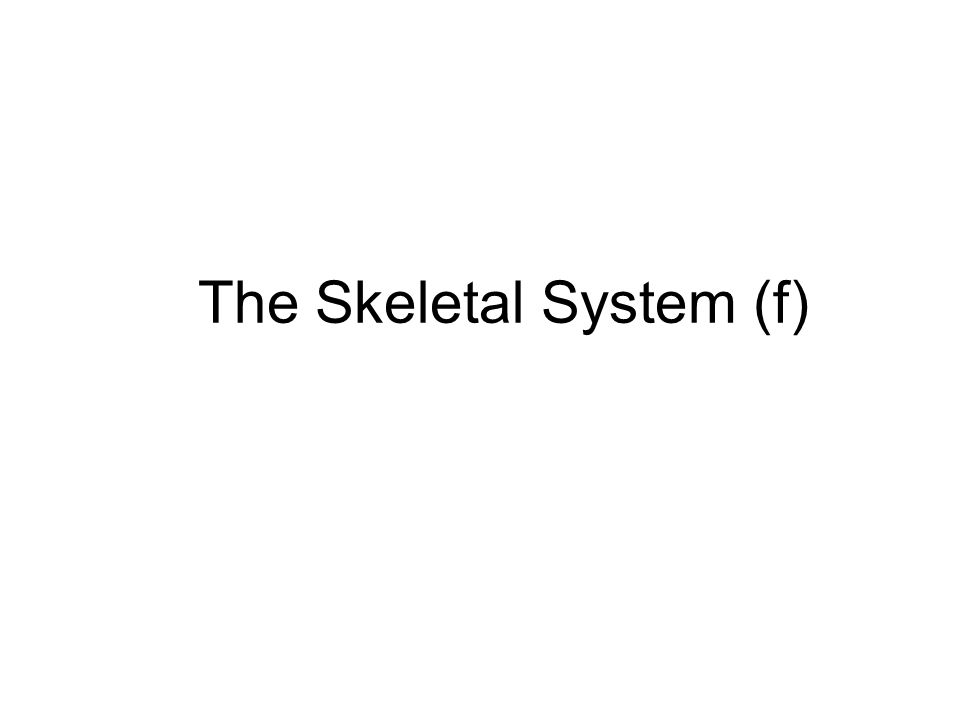 The Skeletal System (f)