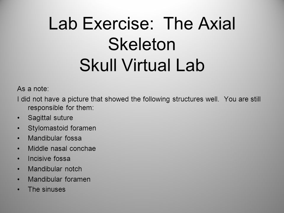 Lab Exercise: The Axial Skeleton Skull Virtual Lab