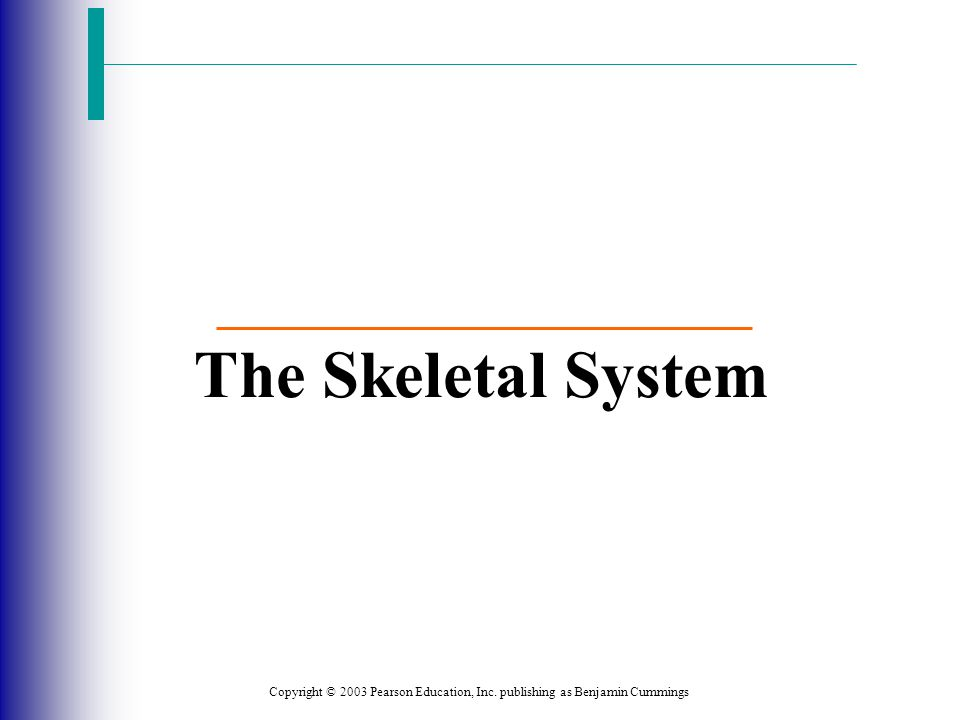 The Skeletal System Copyright © 2003 Pearson Education, Inc. publishing as Benjamin Cummings