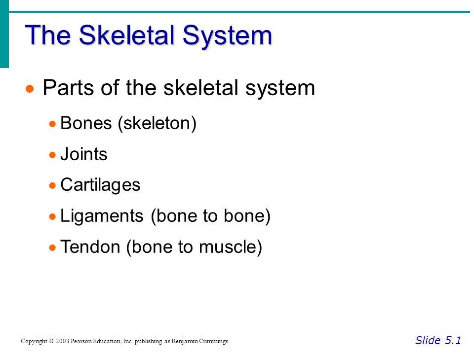 The Skeletal System Parts of the skeletal system Bones (skeleton)
