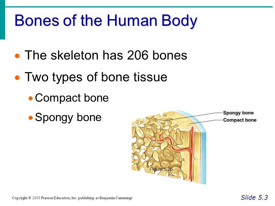 Bones of the Human Body The skeleton has 206 bones