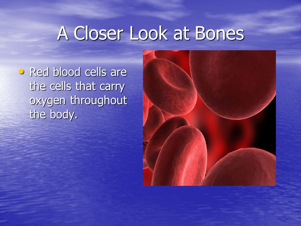 A Closer Look at Bones Red blood cells are the cells that carry oxygen throughout the body.