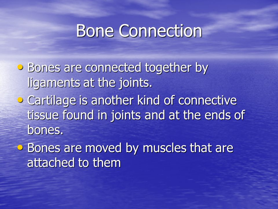 Bone Connection Bones are connected together by ligaments at the joints.