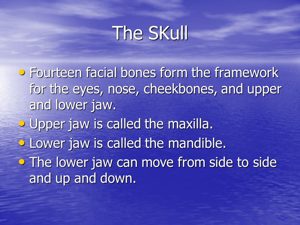 The SKull Fourteen facial bones form the framework for the eyes, nose, cheekbones, and upper and lower jaw.