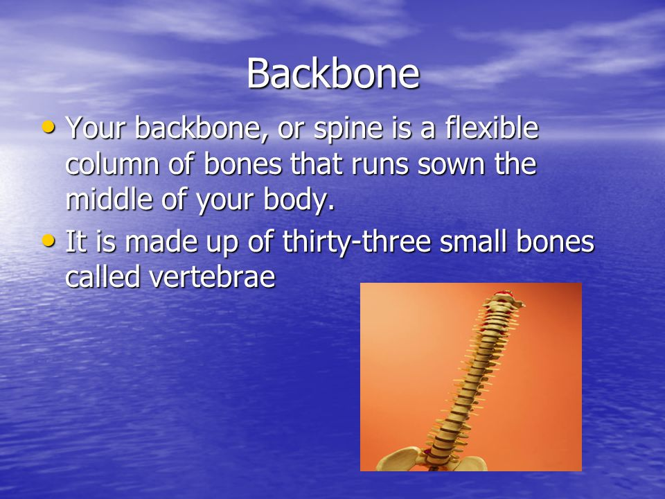 Backbone Your backbone, or spine is a flexible column of bones that runs sown the middle of your body.