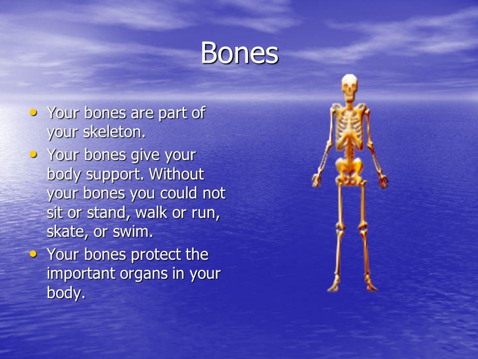Bones Your bones are part of your skeleton.