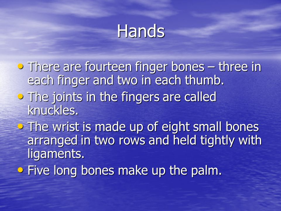 Hands There are fourteen finger bones – three in each finger and two in each thumb. The joints in the fingers are called knuckles.