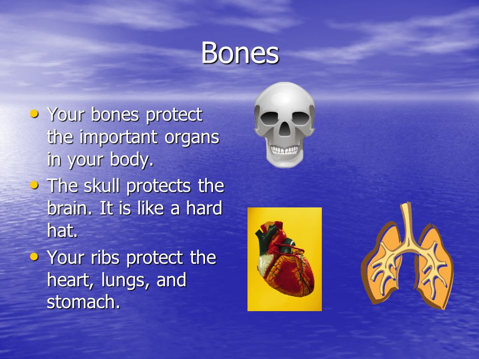 Bones Your bones protect the important organs in your body.