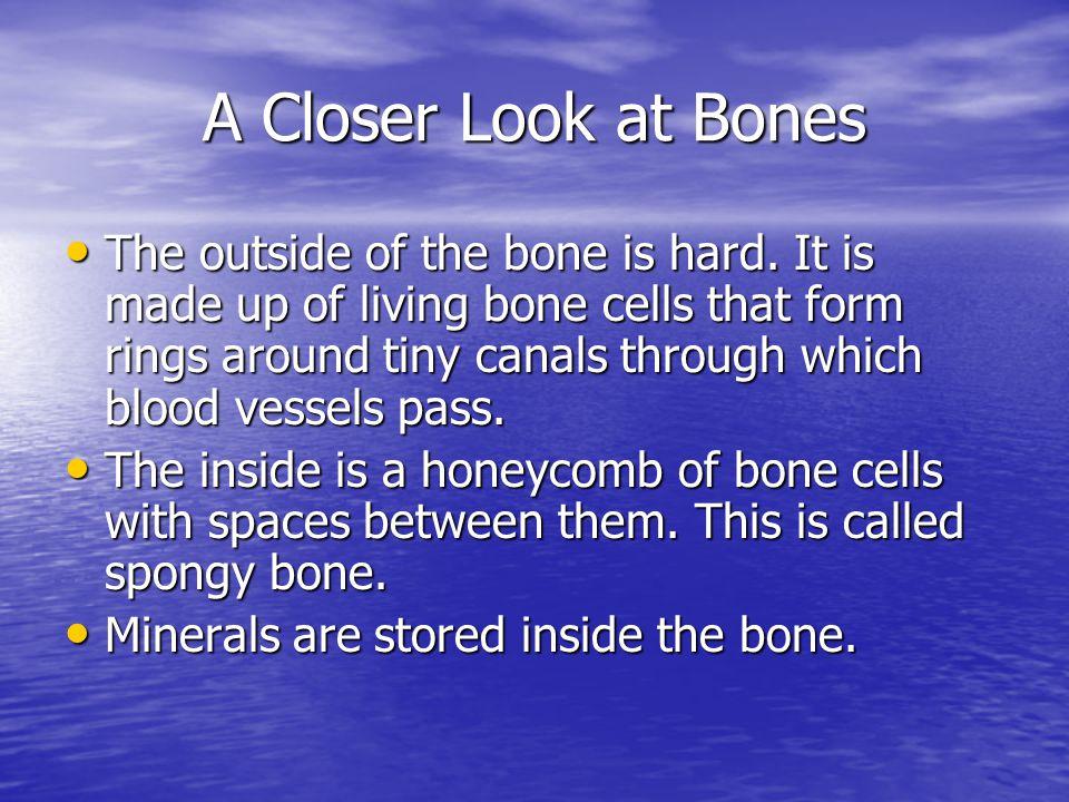 A Closer Look at Bones