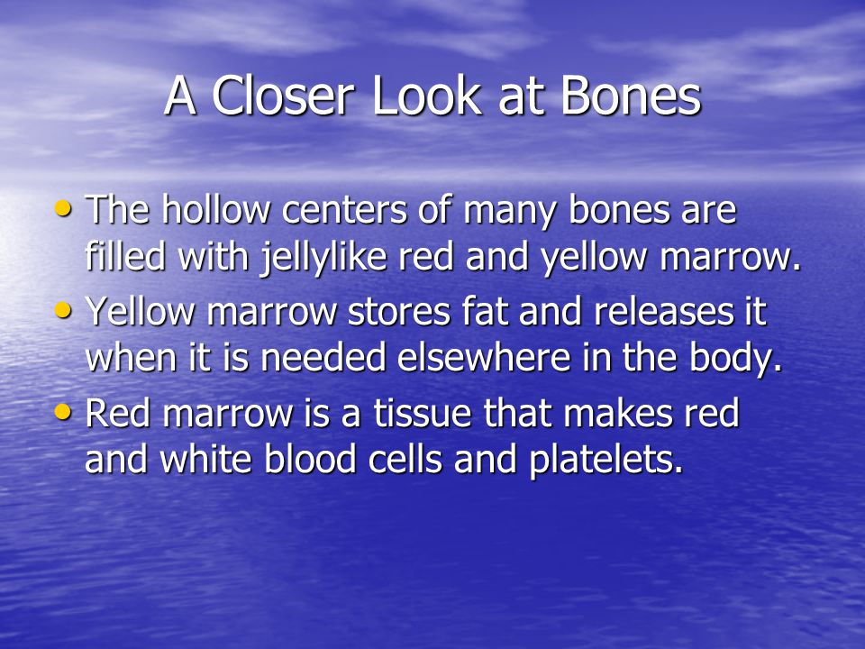 A Closer Look at Bones The hollow centers of many bones are filled with jellylike red and yellow marrow.