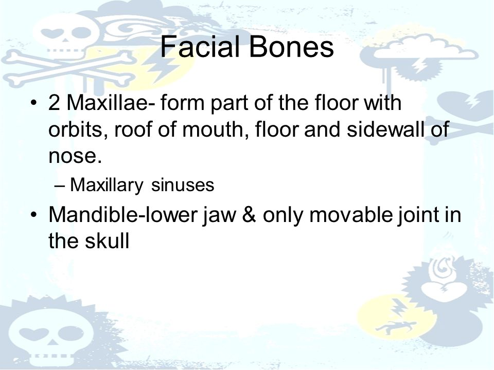 Facial Bones 2 Maxillae- form part of the floor with orbits, roof of mouth, floor and sidewall of nose.