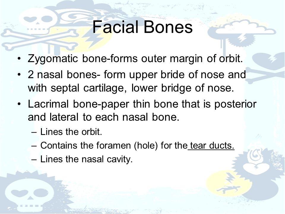 Facial Bones Zygomatic bone-forms outer margin of orbit.