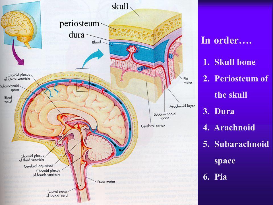 In order…. skull periosteum dura 1. Skull bone 2. Periosteum of
