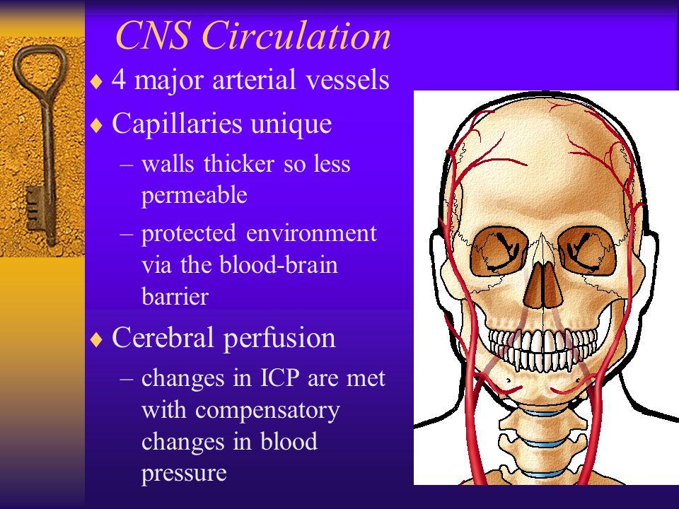 CNS Circulation 4 major arterial vessels Capillaries unique