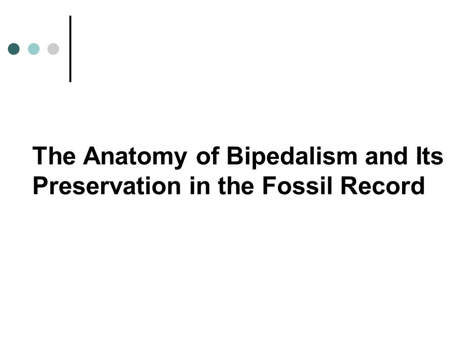 The Anatomy of Bipedalism and Its Preservation in the Fossil Record