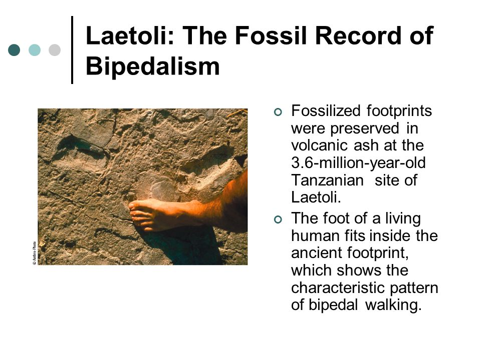 Laetoli: The Fossil Record of Bipedalism