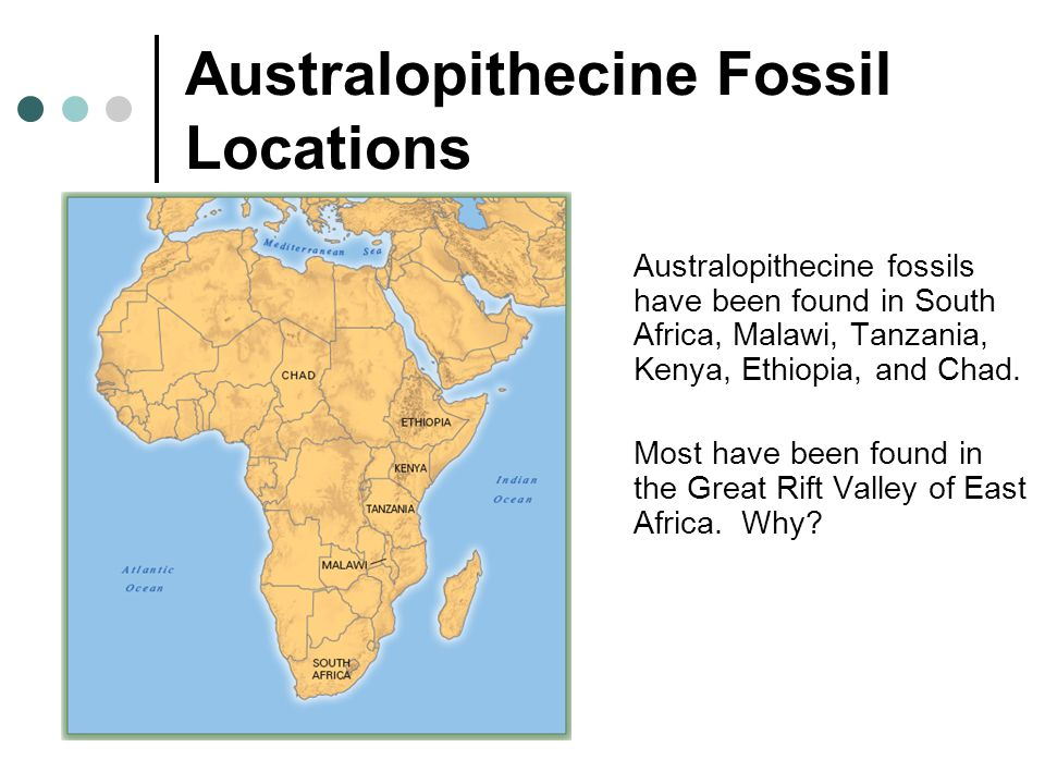 Australopithecine Fossil Locations