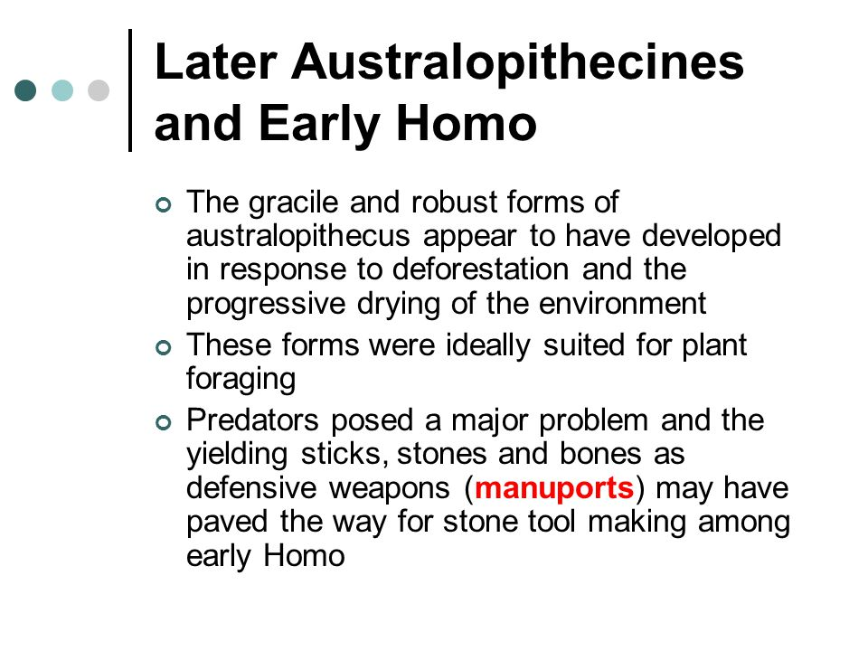 Later Australopithecines and Early Homo