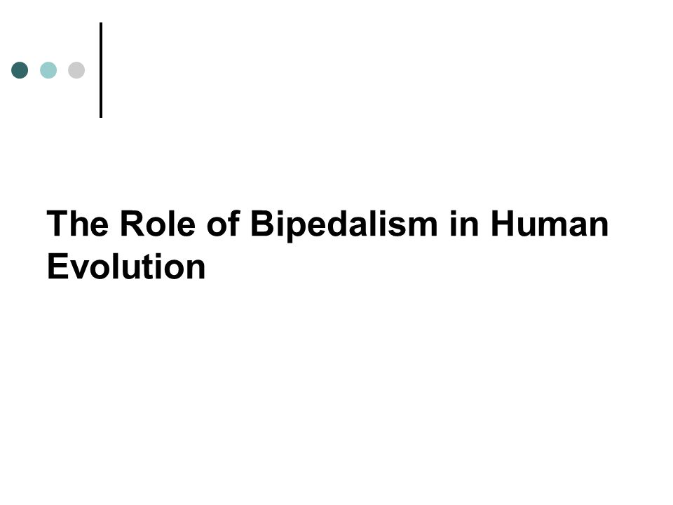 The Role of Bipedalism in Human Evolution