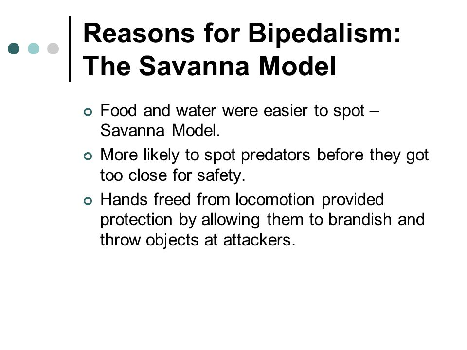 Reasons for Bipedalism: The Savanna Model