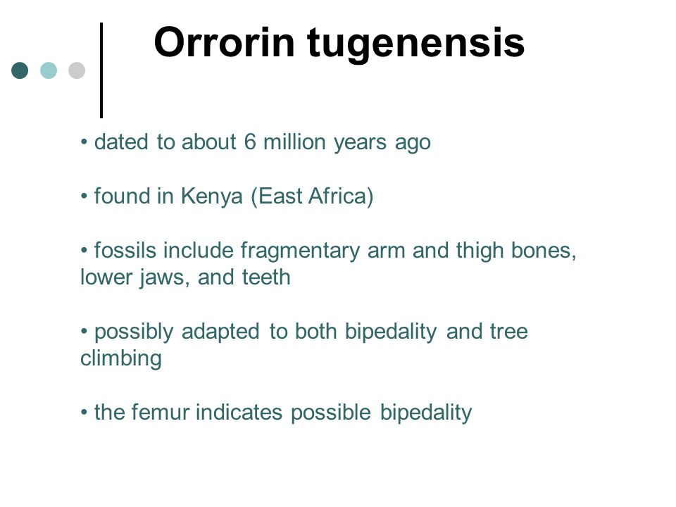 Orrorin tugenensis dated to about 6 million years ago